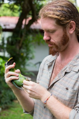 Ornithologist Cody Cox holds an emerald toucanet on the campus of the University of Georgia in Costa Rica on Wednesday, June 22, 2016. (Photo/Rachel Eubanks, www.rachel-eubanks.com)