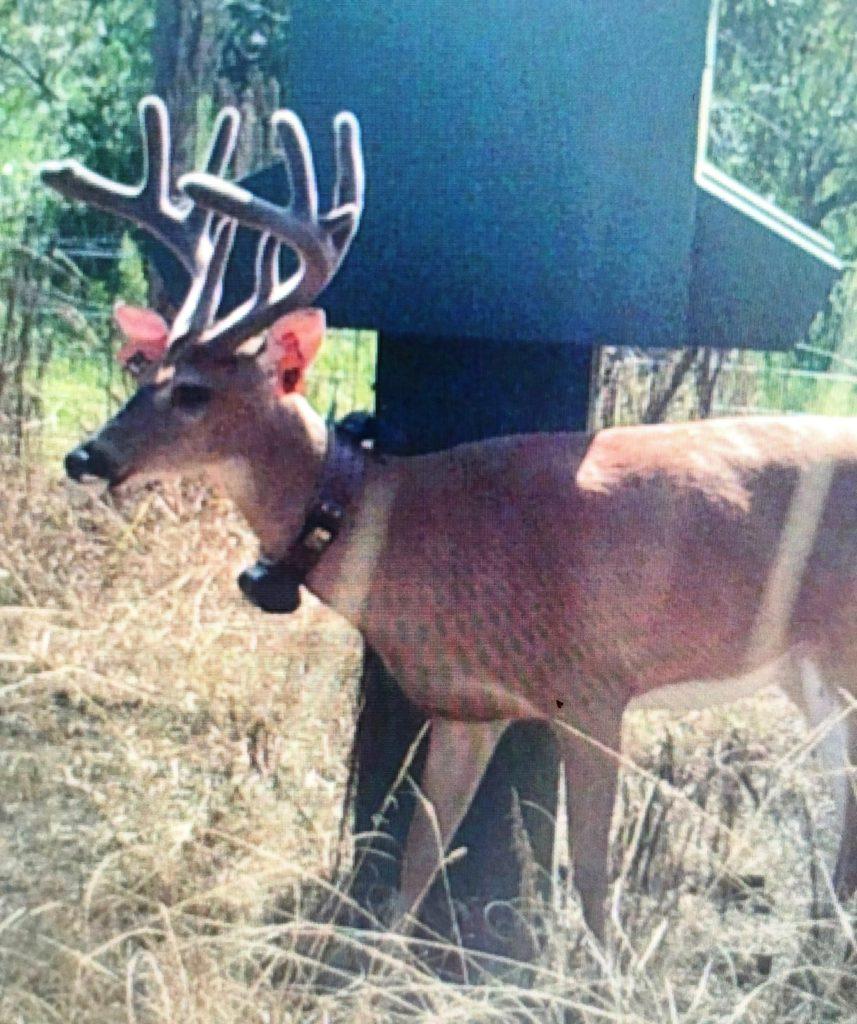 July 5 buck