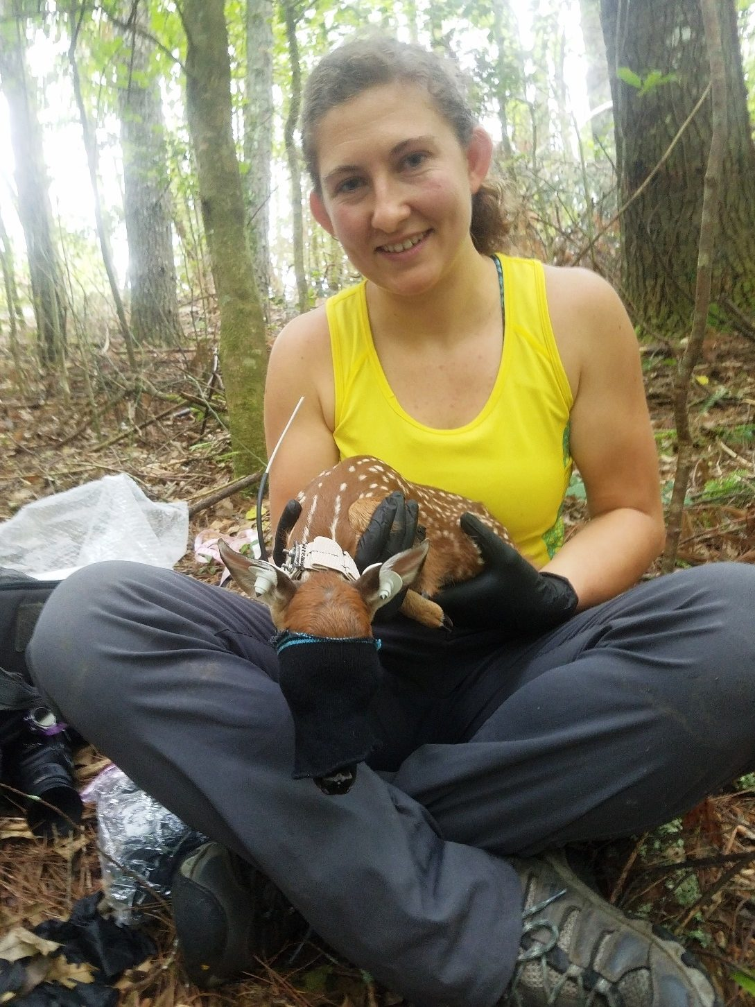 Field-crew leader, Rebekah Lumkes  with a captured fawn.