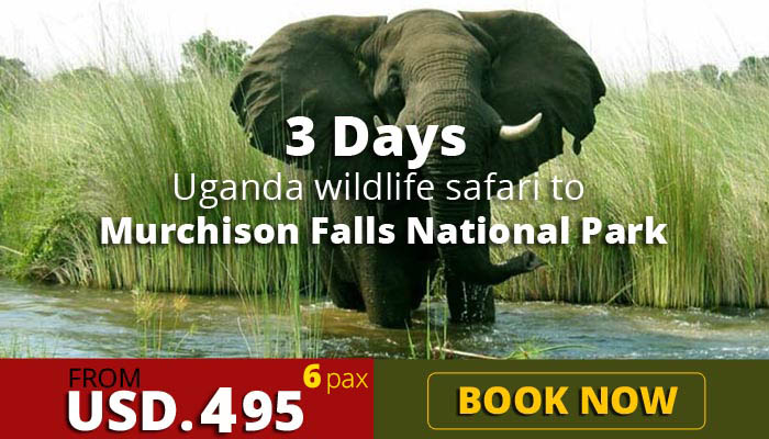 3 days wildlife safari to Murchison Falls National park