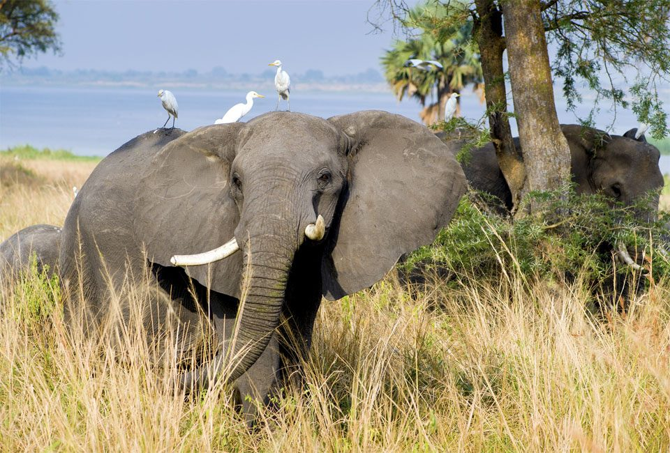 Wildlife abundance - A must visit destination in Africa
