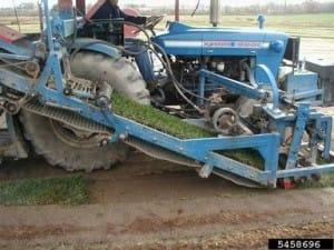 Sod harvesting, Rachel McCarthy, Cornell University – NEPDN, Bugwood.org