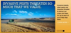 Invasive pests 1