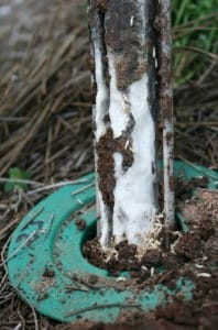 Termites on bait Forschler
