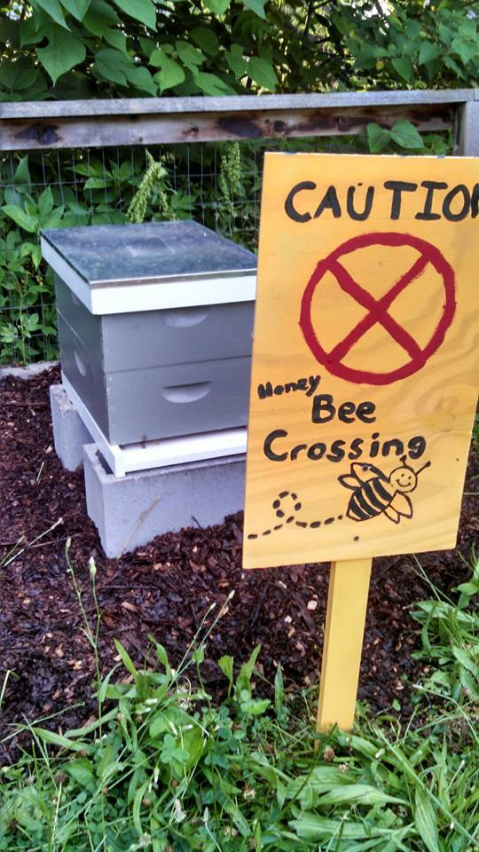 Honey Bees in the Community Garden-A Guest Post by Jennifer