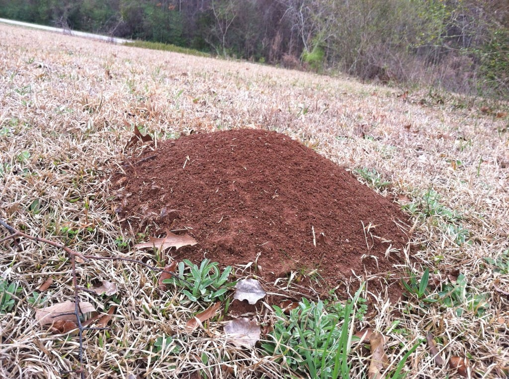 When Is The Best Time Of Year To Control Fire Ants