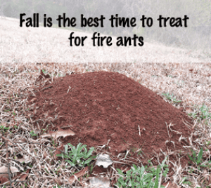Dealing with Fire Ants in the Community Garden