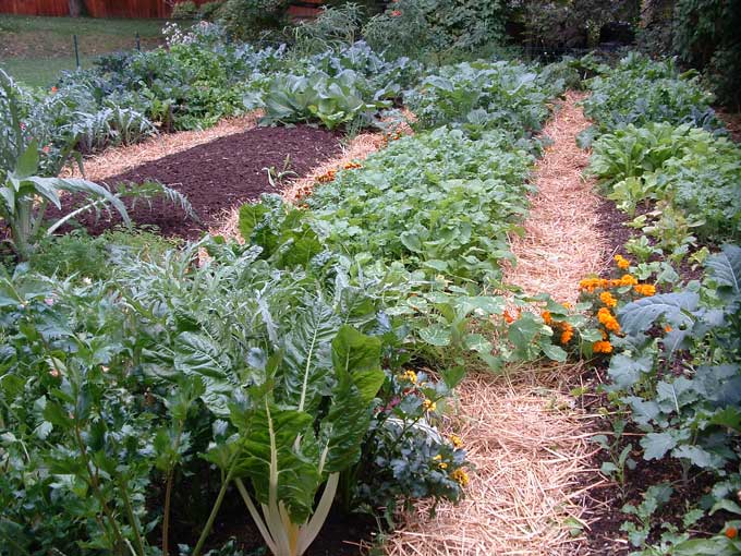 spinach turnips and peas can be started from seed lettuce and radish can be seeded about every two weeks broccoli cauliflower and collard plants - Fall Garden Plants