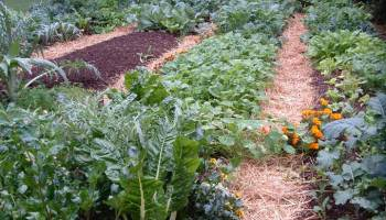 plant a fall garden - Fall Vegetable Garden