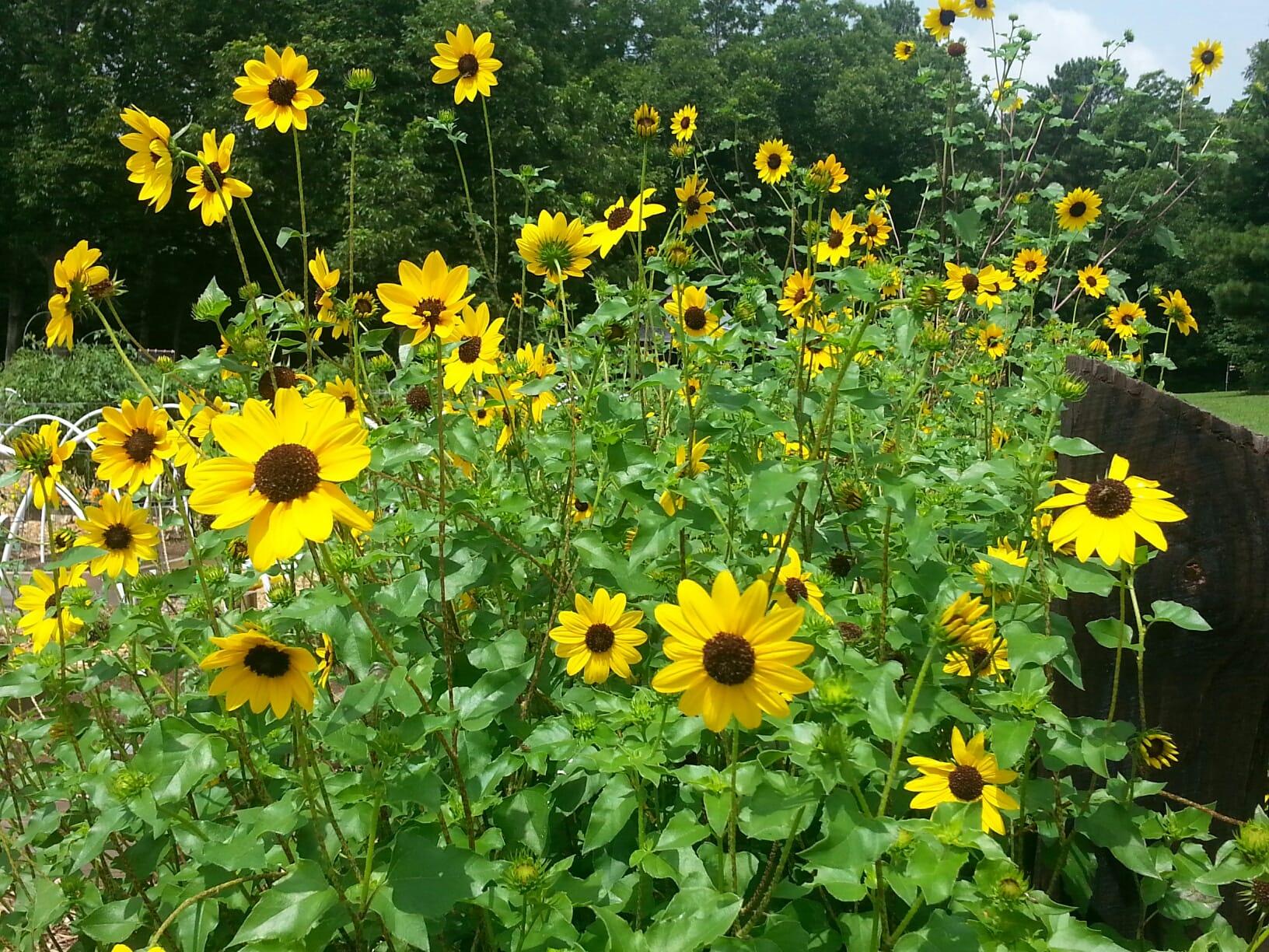 Green Meadows Pollinator Plants