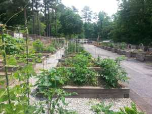 A County of Gardening Immigrants