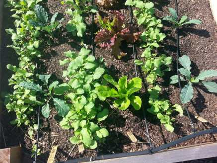 Seedlings will need water during October, which is usually one of our driest months.