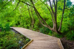 Boardwalk trail at Patterson Park, Baltimore, Maryland. Image Credit: Shutterstock.com