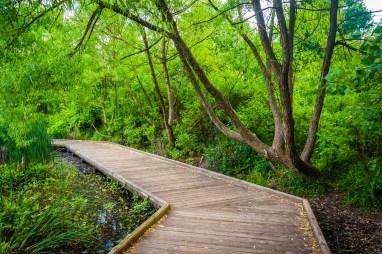 Boardwalk trail at Patterson Park, Baltimore, Maryland. Image Credit: Shutterstock.com