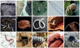 Enhancing biodiversity for waste destruction
