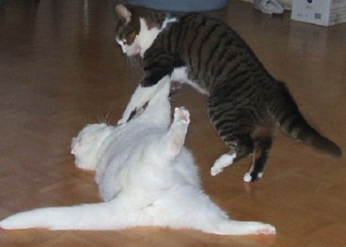 look even the cats do pilates!
