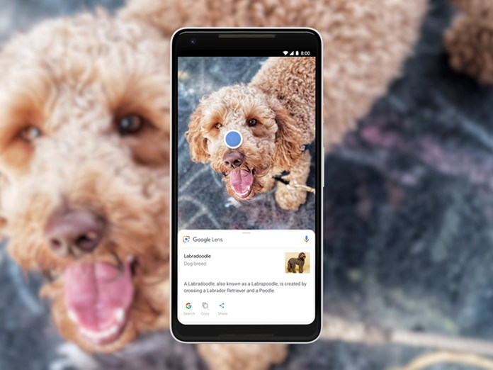 google lens image search results for a dog