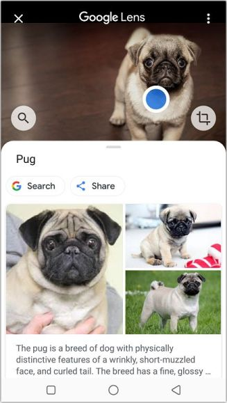 image search results from Google lens