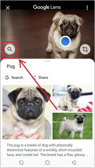 Selecting a category for image search results