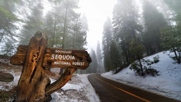 3 Creen Wallpaper Fall Sequoia National Park Hd Wallpaper 4k Desktop