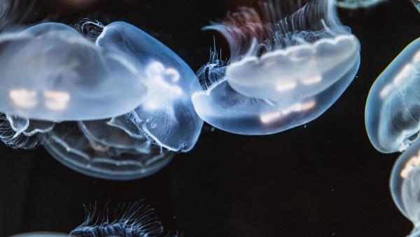Cute Snake Hd Wallpaper Glowing Jellyfish 4k Free Photography Desktop Image