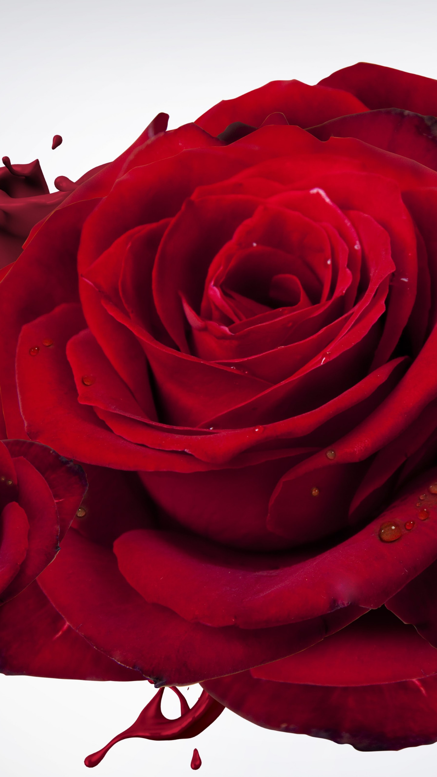 Vertical Wallpaper Hd Download Wallpaper The Most Beautiful Red Roses 1440x2560