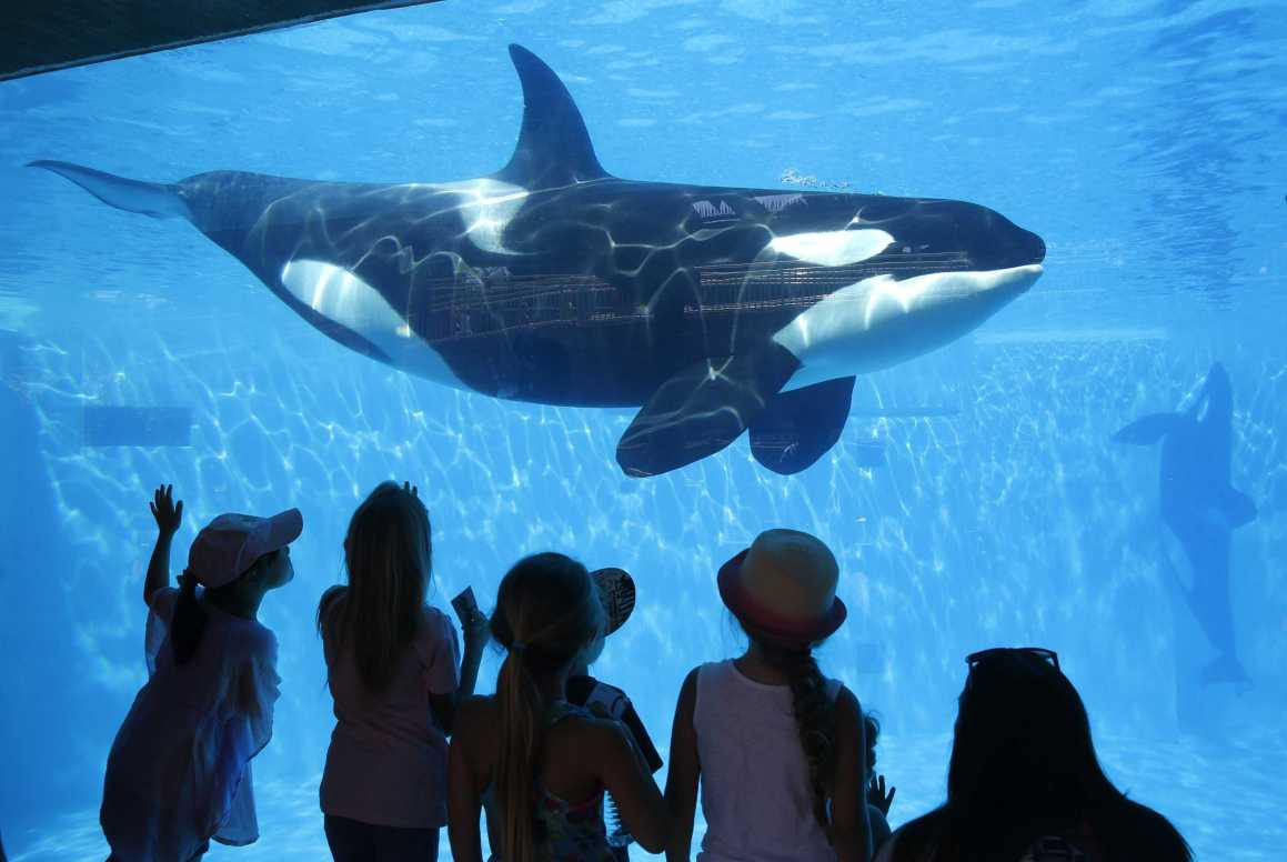 """Orcas are Animals"": 6 Reasons why this Reasoning Does not Work in Favor of Mistreatment"