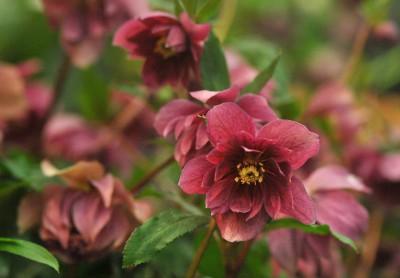 Full Bloom: a poem