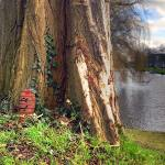 Elfendeurtjes in Alkmaar: een route langs 22 plekken