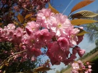 Mooie volle bloemen