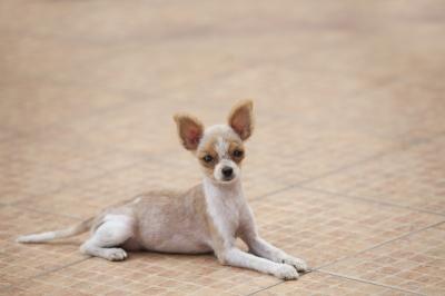 Puppy trainen, hoe kan ik mijn pup trainen?