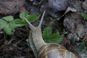 De slak uitjebewust