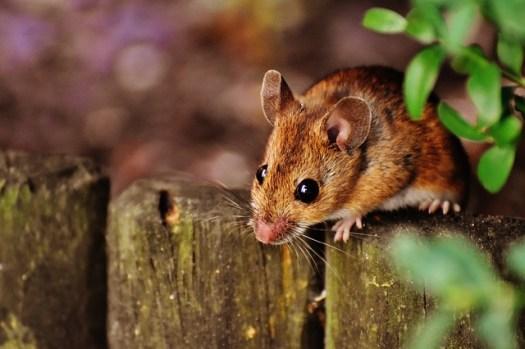De muis uitjebewust