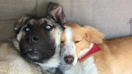 Zora en Romeo