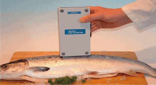 megukur kualitas kadar kesegaran ikan