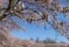 tavasz illusztráció