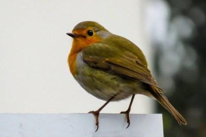 ロンドンの鳥は真夜中にさえずる
