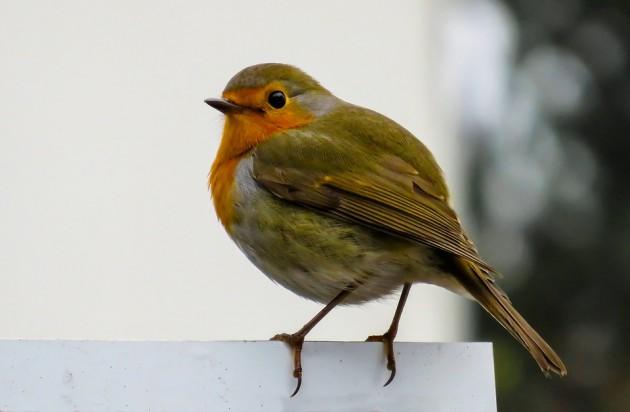 bird-1099639_960_720