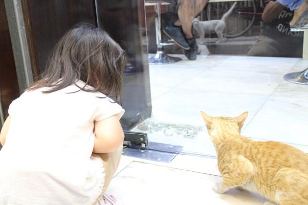 cat_on_the_street