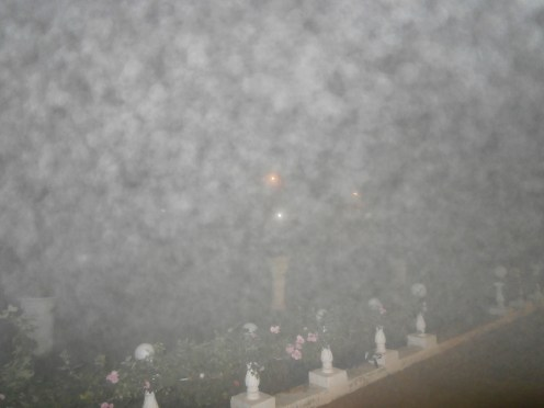 One very foggy evening at S.A.G. Institute (2)