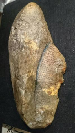 Vicky Smith's son found this Stigmaria, part of the root system of a Carboniferous lycopod, on a Hampshire beach. It was possible washed up from a ship's ballast, bound from a colliery.