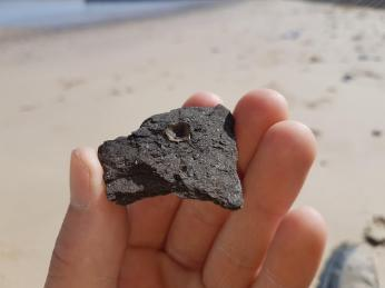 A fish vertebra - possibly from the Cromer Forest Bed! found by Clare Ashworth