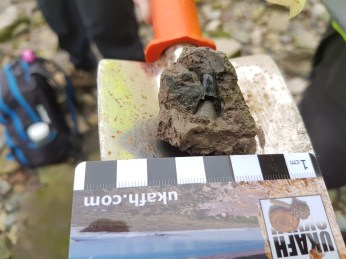 Huge Severnichthys tooth found by Mary Bite
