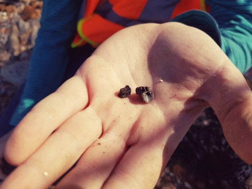 Fish vertebra found by Nathan Graham