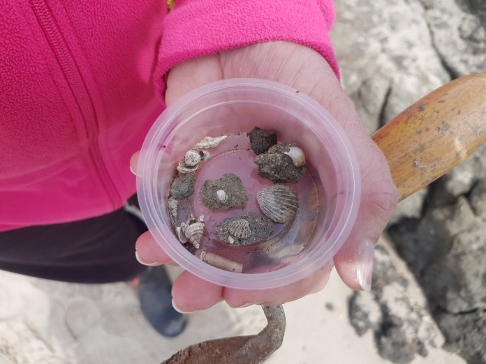 Box of small Bivalves and Gastropods found by Nicky Parslow