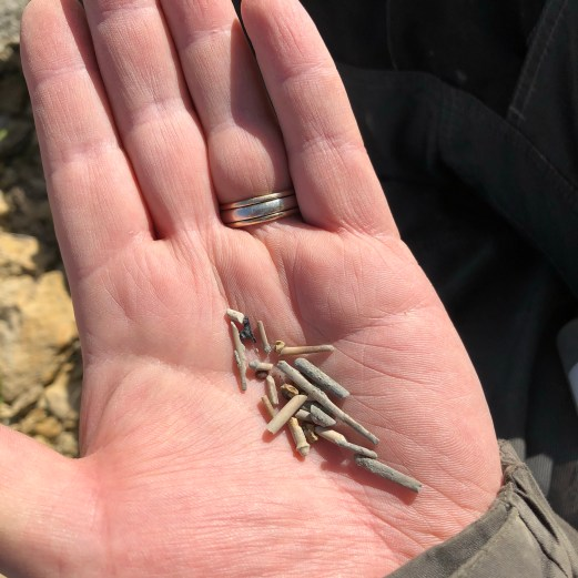 Echinoid spines, fish and shark teeth found by James