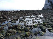 Freshwater Bay Steinpool