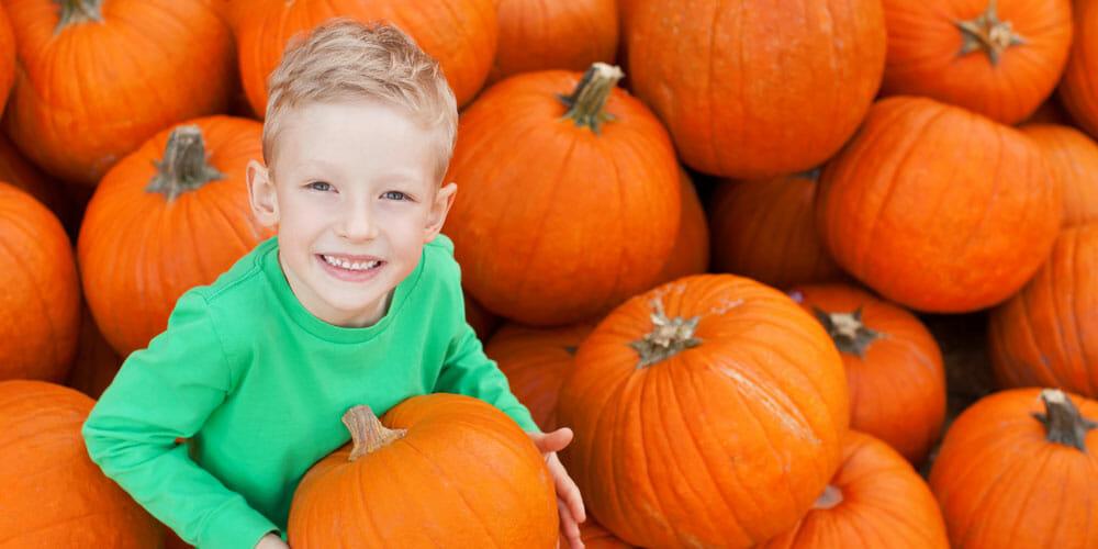 It's Pumpkin Picking Time