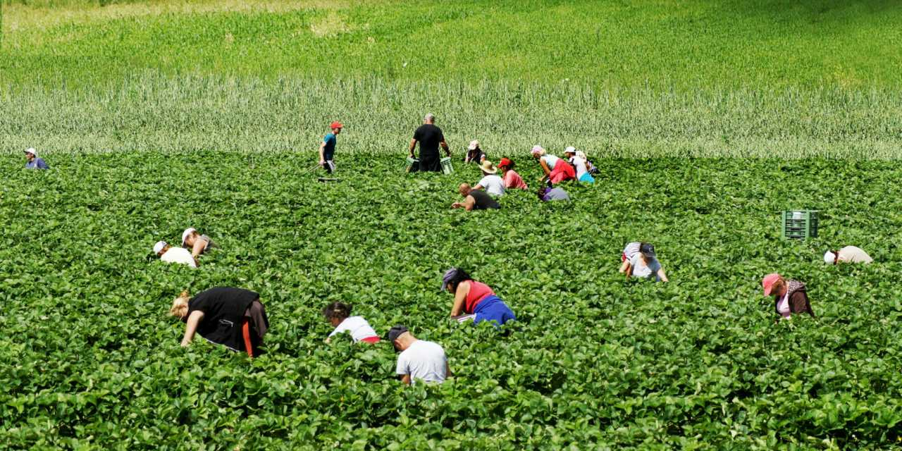 Donations to Make Farmworker Shelter a Reality