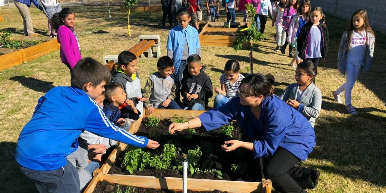 Collaborative Partnership Nets New School Garden
